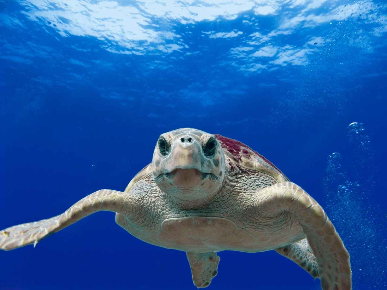 Turtles and Scuba Diving inFlorida