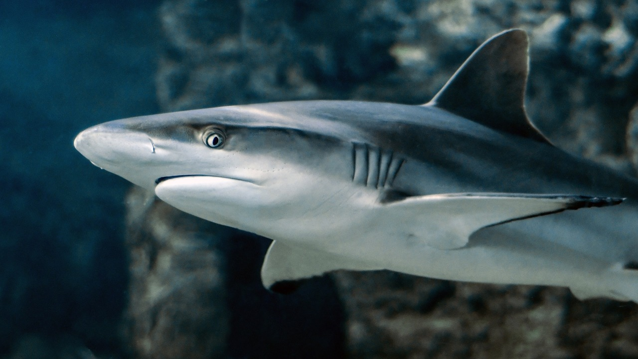 BREAKING! US House Voted (And Passed!) To End Shark Fin Sales